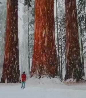Some big trees