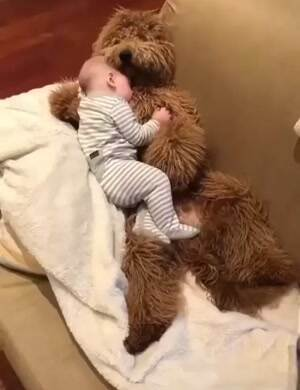 ASleep with my teddy dog