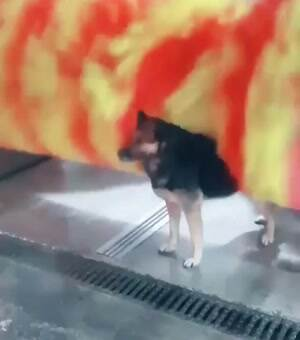 awesome dog getting a scrub down