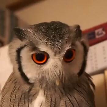 show me your owl face