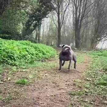 shake it off dog