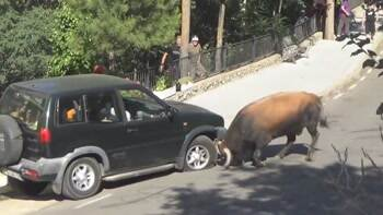 never bring an SUV to a bull fight