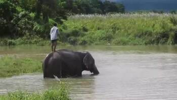 Elephant just giving himself a bath
