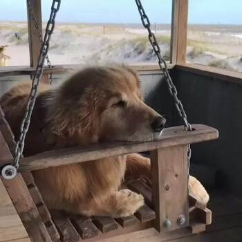 That is one heck of a relaxed doggo