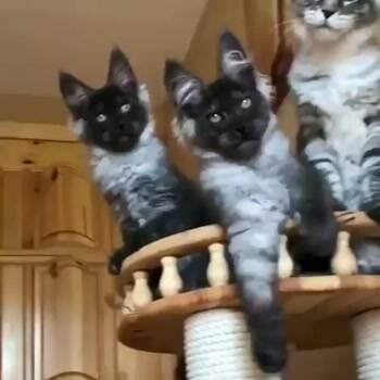 These are some cute cats