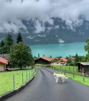What a beautiful view at Lake Brienz