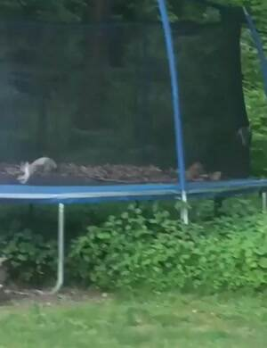 A cat trampoline party