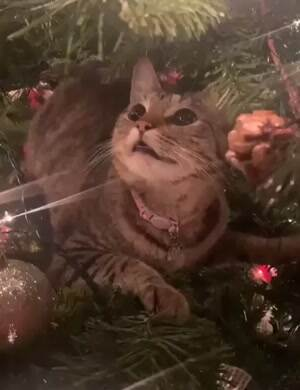 This cat is cracked out on the Christmas tree