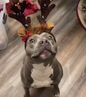 I am a reindeer now