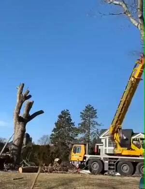 Putting the tree back where it was