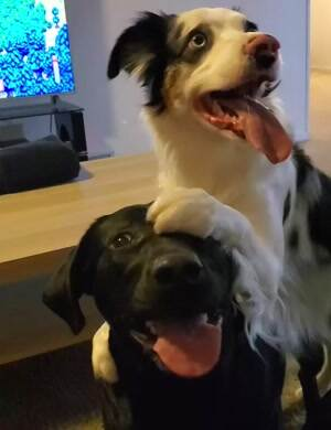 These cute puppers get along real good