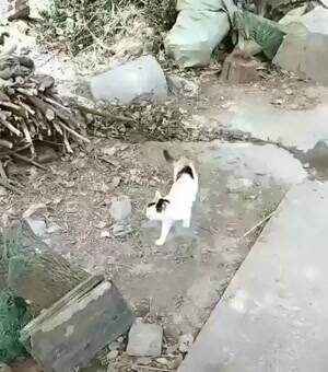 Momma cat just doing her job
