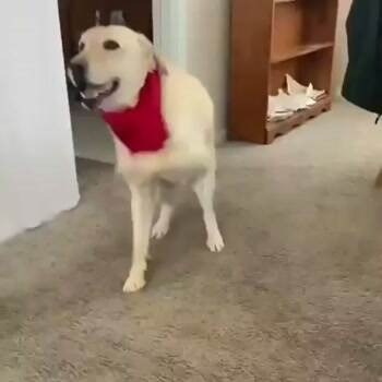 The dancing dog wants some treats